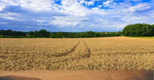Осчетоводяване на щета от селскостопанска продукция