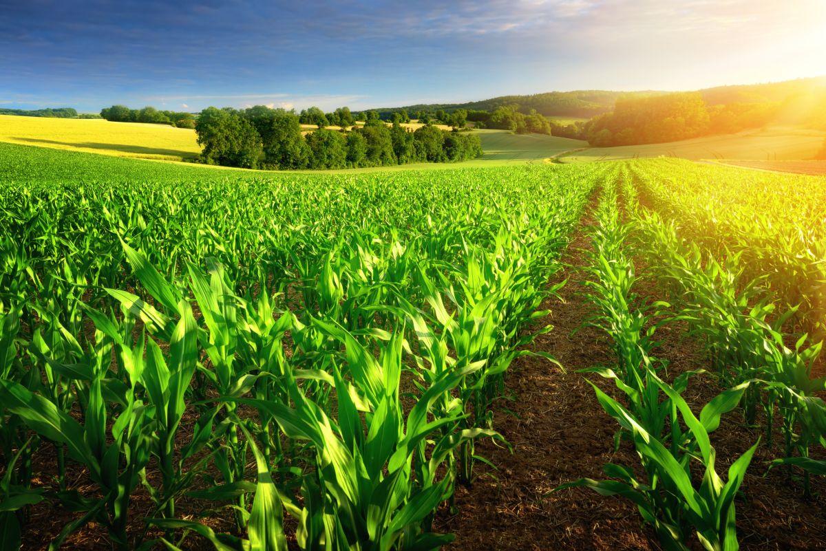 Основи на отчитане на растениевъдството