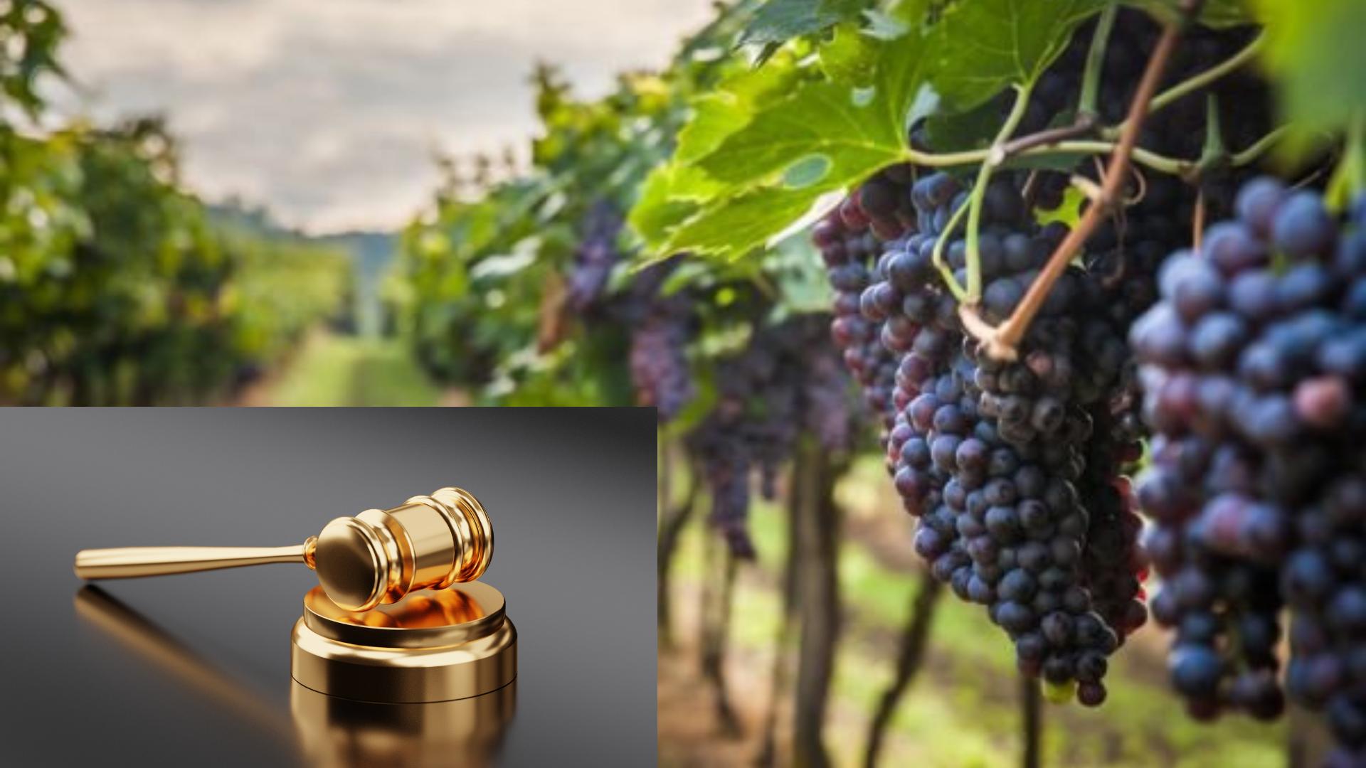 Промени в Наредба 6 за предоставяне на финансова помощ на лозаро-винарския сектор за периода 2019-2023 година