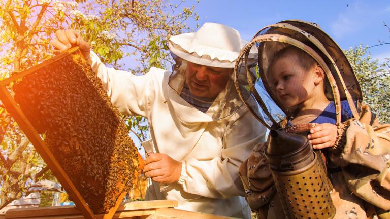 Срок и условия за кандидатстване по Национална програма по пчеларство