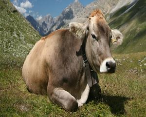 Отчитане на изваждането от употреба на животни от основните стада